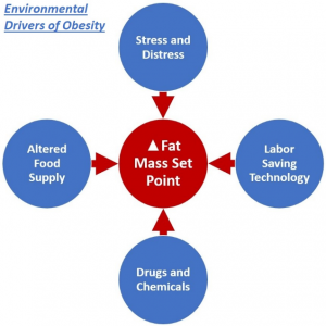 Environmental Drivers of Obesity